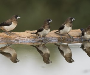 birds-690545_1280