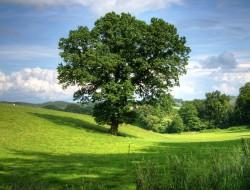 tree-402953_1280