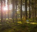 forest-638124_1280